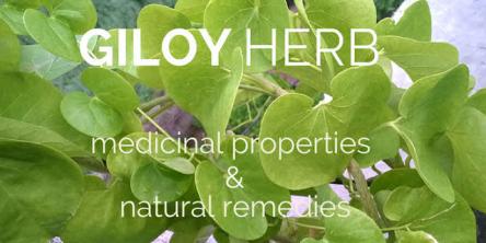 Health benefits of Guduchi-GIloy