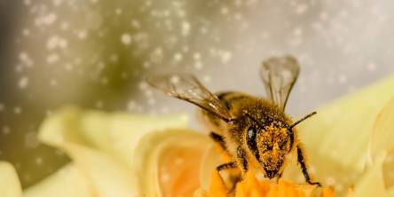 Bee Venom for Skin Care