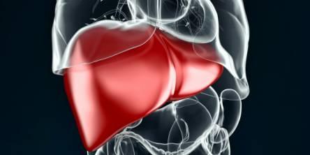 pediatric liver
