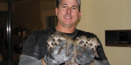 raccoon removal tampa