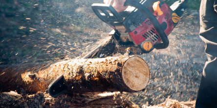 5 Things to Look for When Buying an Electric Chainsaw