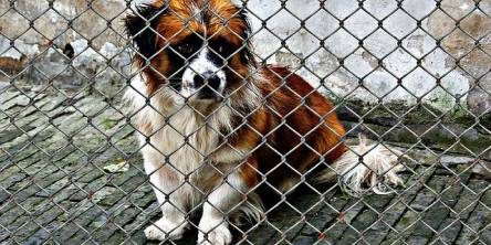 Top Reasons Why Your Dog Needs a Dog Mesh