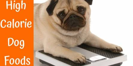 high calorie dog foods