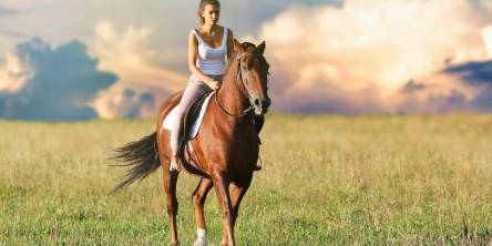 Novice Horse Rider? Experience More Comfort and Safety on your Next Ride