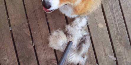 Pet Hair Cleaning Tips to Help with Spring Shedding