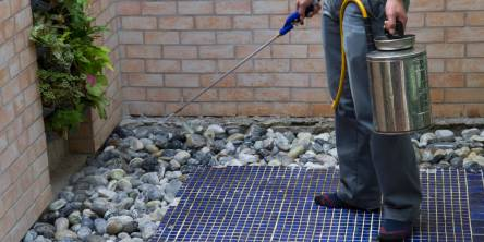 DIY Pest Control Or Professional Pest Control