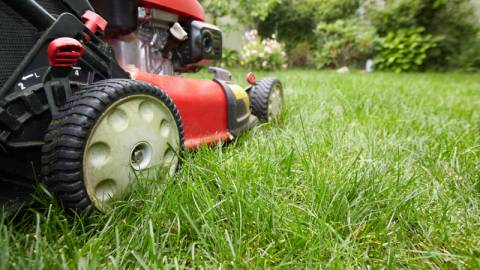 Red Lawn Mower Cutting the Lawn