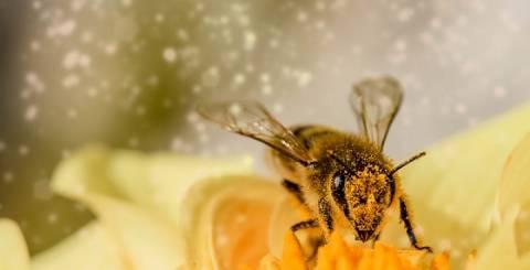Bee Venom for Skin Care