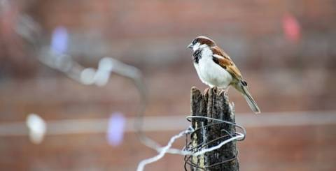 bird proofing sparrow