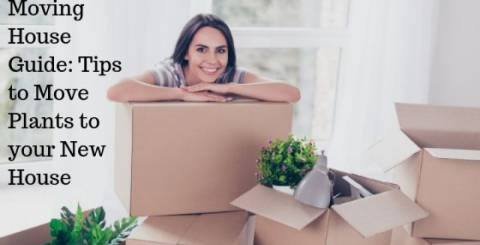 Moving House Guide: Tips to  Move Plants to your new house
