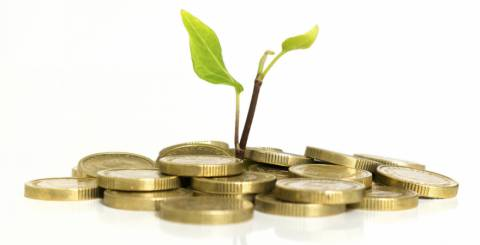 coins with plant