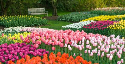 Wholesale Flower Bulbs Supply from Holland Beauty Flower and Bulb Corp.