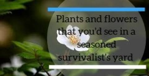 Plants and Flowers That You'd See in A Seasoned Survivalist's Yard