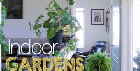 How to Décor Your Home with Indoor Plants