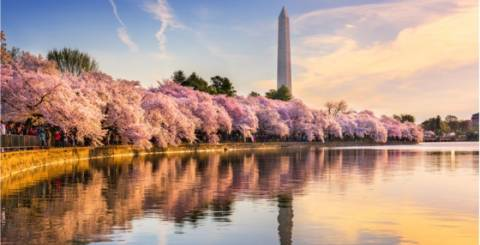 Free Things To Do In Washington DC