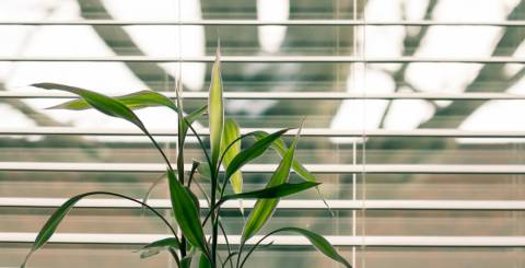 All About Blinds For Your Windows