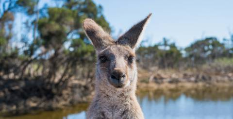 What to Know When Going to Australia
