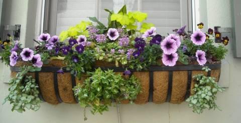 types of planters for window box gardening - Window Box Planters