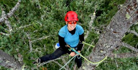 Arborist Melbourne at top of Pine tree